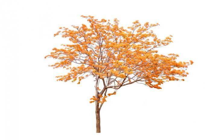 najstarsze drzewo na świecie