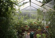 Jak świadomie i efektywnie dbać o rośliny?
