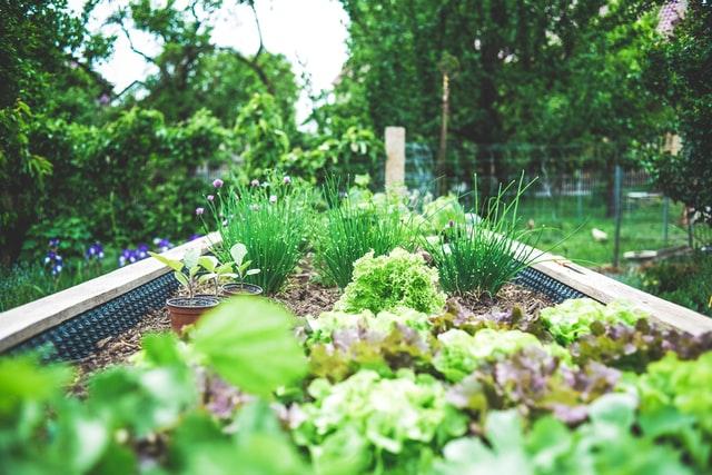, Jak świadomie i efektywnie dbać o rośliny?