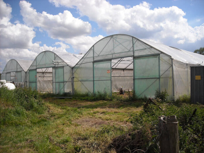 Jak wybrać folię na tunel ogrodniczy?